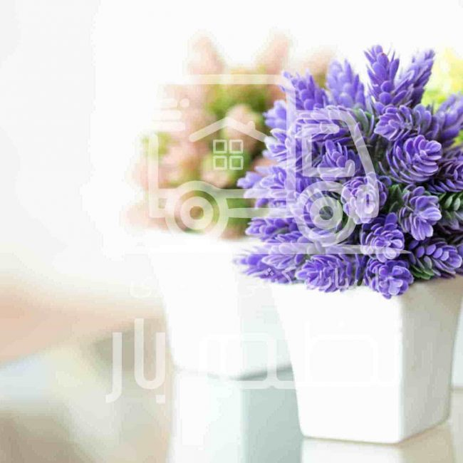 حمل اثاثیه منزل در اصفهان - گل و گیاه آپارتمانی